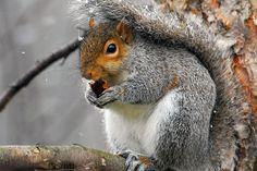 50 Examples of Animal Photography - AntsMagazine.Com