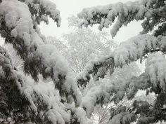 A képzelet szárnyán: Téli képek