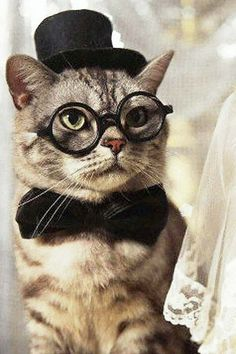 cats with glasses | Cat with Glasses Wallpaper 640x960 for iPhone 4, iPhone 4S. File Size ...