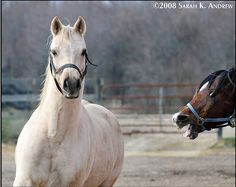 0fdf9a4a 12 Epic Horse Photobombs   HORSE NATION List Of Animals, Funny Animals,  Funny Pets