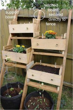 Mini gardens in drawers