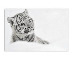 Forex print Baby Tiger, zwart/wit, 60 x 40 cm