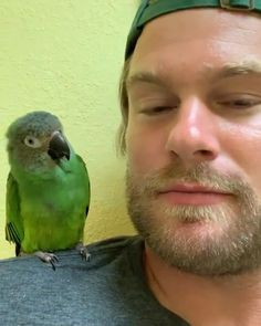 Awesome video by Dan McKernan from Barn Sanctuary Cute Little Animals, Cute Funny Animals, Cute Cats, Funny Birds, Cute Birds, Barn Animals, Animals And Pets, Beautiful Birds, Animals Beautiful