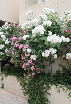 Container Garden Pink and white roses