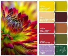 (3) Gallery.ru / Фото #91 - сочетание цвета оттенки красного и розового…