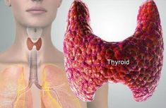 Image result for You Suffer From a Thyroid Disorder – 4 Foods you Absolutely Need to Avoid