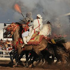 Horses of Morrocco | Recent Photos The Commons Getty Collection Galleries World Map App ...