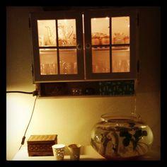 Jeg har fået lys i vores vitrineskab, så det hygger lidt ved fiskene