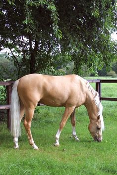 Such a pretty Palomino! Horses And Dogs, Cute Horses, Pretty Horses, Horse Love, Wild Horses, Black Horses, Akhal Teke, Most Beautiful Horses, Animals Beautiful