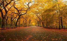 Arcos dourados no Central Park, Nova Iorque, EUA