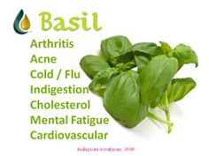 Young Living Essential Oils: Basil