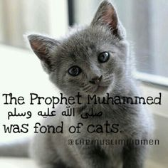 One time a cat walked into the mosque and was just chilling there until the prayer was over. Then it just walked out.