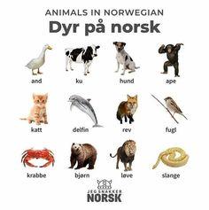 Animals in Norwegian, language lesson Sweden Travel, Norway Travel, Danish Language, Places To Travel, Places To Go, Norwegian Words, Learn Swedish, Norwegian Vikings, Norway Language