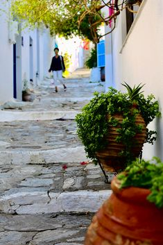 Skiathos, Greece Skiathos, Santorini, Greece, Sidewalk, Plants, Walkway, Flora, Plant, Grease