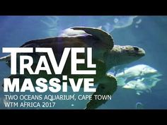 Capturing the essence and vibe of the 2017 WTM Africa opening at the V&A Waterfront Two Oceans Aquarium - Travel Massive! Thanks to Travel Massive Chapter . Ocean Aquarium, V&a Waterfront, The V&a, Travel And Tourism, Africa Travel, Cape Town, Oceans, Mixer, Underwater