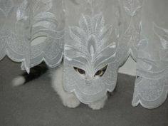【画像】やべえ、めっちゃ見られてるwwwwwwww       I think she's lovely, but a bit shy to meet her groom.....The Maharajah!!
