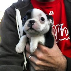This is the puppy we're thinking about getting. The kids have no idea.
