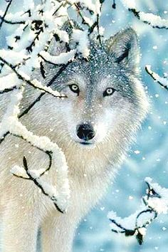Wolf in Snow - Could we use animal picts and make our own background and branches???