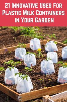 Don't simply recycle your plastic milk containers, upcycle them! There are so many brilliant uses for them in the garden. Glass Milk Bottles, Plastic Bottles, Container Gardening, Gardening Tips, Plastic Milk, Plant Labels, Liquid Fertilizer, Recycled Garden, Plant Supports