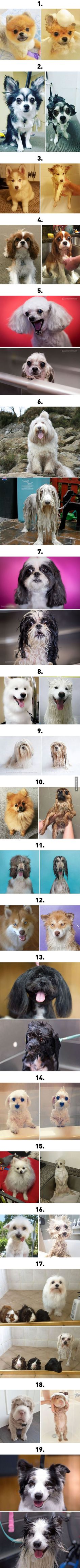 19 Dogs Before And After Bath Time