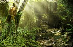 © Susan Schroder  www.SusanSchroder.com A new image to welcome Spring.... A mossy green Dryad emerging from her tree captures a handful of sunshine.