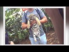 Zoo That Forces Tigers To Swim Thinks It's OK To Hit Animals.  This is a crappy roadside zoo in Dade City, FL.