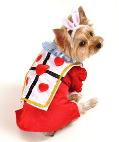 Red White Rabbit Dog Costume $21.99 | Zulily Halloween 2014 (Alice and Wonderland)