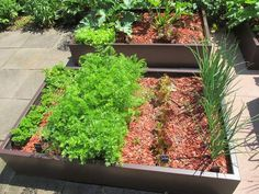44 best Potager en carré design images on Pinterest   Horticulture ...