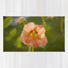 Nasturtium Flower Throw Rug Flower Home Decor by GriffingHomeDecor  -- Let our members create fine custom products like these for you.  Become a member at http://www.digicolorcreations.com