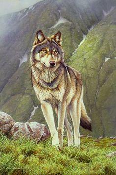 Eric Wilson - Peintre Animalier - Loup