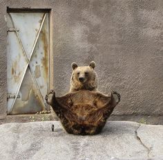 Not Yogi Bear... yoga bear.
