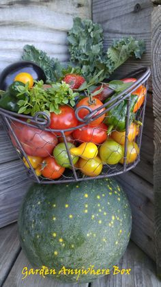 Garden Harvest...October 29, 2015 Moon and Stars watermelon and assorted tomatoes and peppers