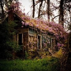 vintage green flowers nature forest cottage Woods litros house
