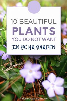 Want to avoid planting invasive perennials in your garden? This list lets you know which vines, trees and flowers to stay away from in your yard. Vegetable Garden For Beginners, Gardening For Beginners, Gardening Tips, Container Gardening, Bamboo Species, Plant Species, Perennial Grasses, Hardy Perennials, Shade Garden