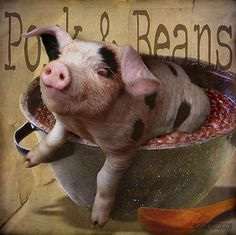 ~ Pork & Beans ~ by Denise Purrington {{say hello to my Little Bears:), via Flickr