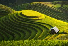 Feel like home - Home at rice field ( landscape thailand natural green asia vietnam land farm Green Hill )