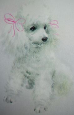 Vintage White Poodle Illustration