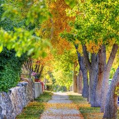 Leaves change and with them we do. Seasons change and we follow suit. The air chills and we wake to a life entirely new. Autumn comes and we Fall too.