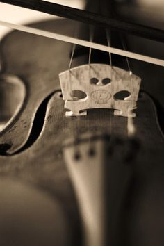 I just really want my own violin one day(: a nice dark colored one that's old and antique looking