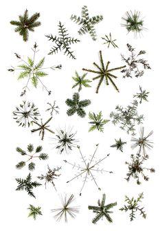 snowflakes (mary jo hoffman)