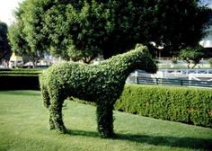 How to Make a Topiary Frame thumbnail