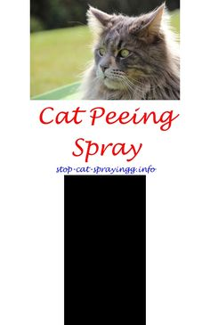 Stop Cat Spraying Cat Urine Home   Cat Spray Life.cat Marking Territory  Cleaning Cat Urine From Couch Best Cat Smell Eliminator Best Cleaner To Remu2026