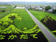 Rice paddy drawings, Inakadate-mura, Aomori Prefecture.   Archaeology showed that rice had been grown in the area for more than 2000 years. To honor this history, the villagers started a rice field behind the town hall. The villagers cultivated and used four different types of heirloom and modern strains of rice to create a giant picture in the field.