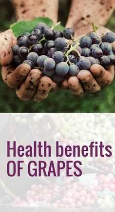 Anti-Cancer Grapes contain powerful antioxidants known as polyphenols, which may slow or prevent many types of cancer, including esophageal, lung, mouth, endometrial, pancreatic, and prostate, breast, and colorectal cancer. #grapes #benefitsofgrapes