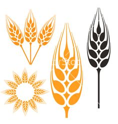 Barley vector image on VectorStock Lion Vector, Vector Art, Cupcake Icon, Castle Vector, Flamingo Vector, Baseball Vector, Feather Vector, Pumpkin Vector, Tattoo