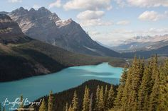 blue peyto lake from the wooden viewing platform
