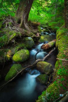 Muddy Creek 2 by Ed Gately on 500px As we were walking back from Ramona Falls, this small area of Muddy Creek caught my eye. I was really drawn in by the round moss covered rocks and fallen trees.