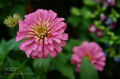 Flower by ohsoonann #nature #mothernature #travel #traveling #vacation #visiting #trip #holiday #tourism #tourist #photooftheday #amazing #picoftheday