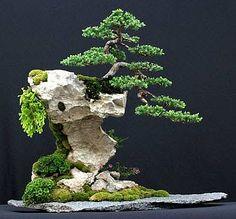 #盆栽 #bonsai art (Via: 6 Important Tips for Beginner Bonsai Tree Caretakers ) この岩、かっこいいですね。 化粧砂にK砂をどうぞ。