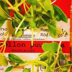 NOUSIAINEN #tatsoi #rucola #punamangoldi #kotipellonpuutarha #nousiainen #suomi #futuremarja #kotimainen #salaatti